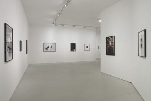 <i>amateur</i>, 2018 </br> installation view, maxxi museum, rome