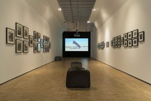 <i>la terra inquieta/the restless earth</i>, 2017 </br> installation view, la triennale di milano, milan