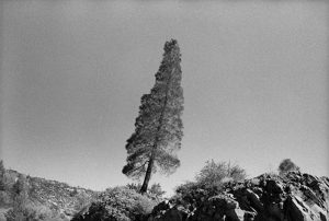 the leaning tree, 2002/2008, chromogenic print, 86 x 127 cm / 33.8 x 50 in