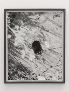 <i>flowers/hole</i>, 2011 </br> framed photograph, 55,5 x 45,5 cm / 21.8 x 17.9 in