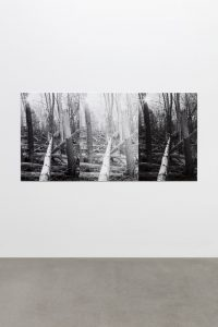 <I>three felled trees</I>, 2018