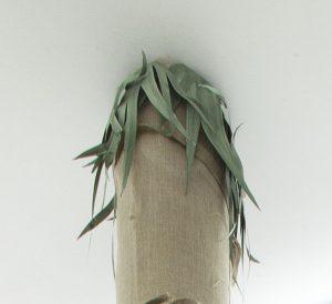 <i>palmenbaum</i>, 1999-2012  </br> (detail)