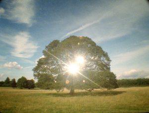per speculum, 2008, film on 35mm, duration 6'35''