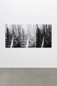 three felled trees, 2018