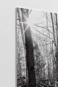 <i>three felled trees</i>, 2018</br> (detail)