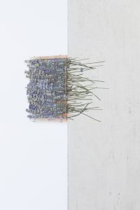 maggie cardelús, by way of pressed lavender, 2012 pressed flowers, spray paint, glass, 18 x 12 cm