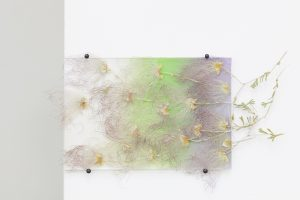 maggie cardelús, by way of pressed apache plumes, 2012 pressed flowers, spray paint, glass, 10 x 15 cm