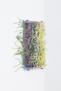 maggie cardelús, by way of pressed alyssium, 2012 pressed flowers, spray paint, glass, 15 x 10 cm