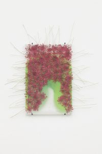 maggie cardelús, by way of pressed pink queen anneis lace, 2012 pressed flowers, spray paint, glass, 15 x 10 cm