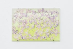 maggie cardelús, by way of pressed pink larkspur, 2012 pressed flowers, spray paint, glass, 12 x 18 cm