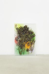 maggie cardelús, by way of pressed leopard lilies (2), 2012 pressed flowers, spray paint, glass, 25 x 17 cm