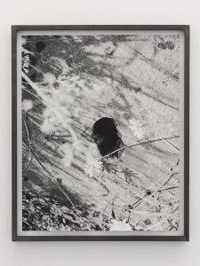 talia chetrit, flowers/hole, 2011 framed photograph, 55,5 x 45,5 cm