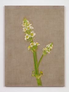 <I>Flor (Flower)</I>, 2005 </br> oil on linen</br> 100,3 x 74 x 2,5 cm / 39.5 x 29.1 x 1 in